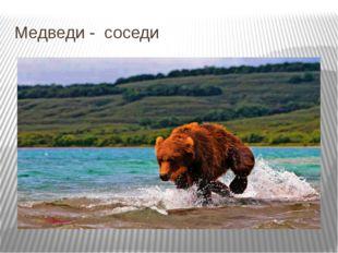 Медведи - соседи