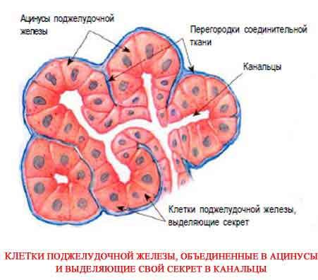 Сеансы хаджи базылкана дюсенбиевича дюсупова скачать , Целители казахстана