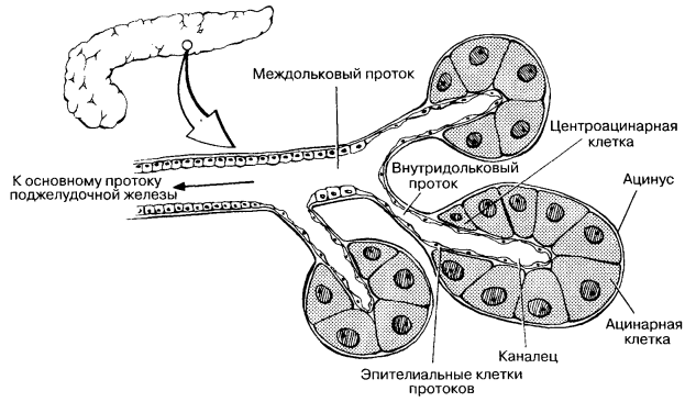 Глава 8. Панкреатиты - Т. Д. Власова Редактор докт мед наук