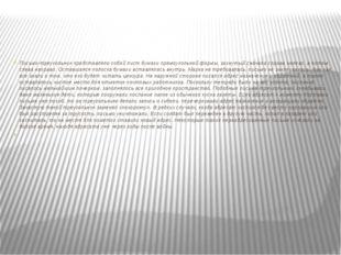 Письмо-треугольник представляло собой лист бумаги прямоугольной формы, загну