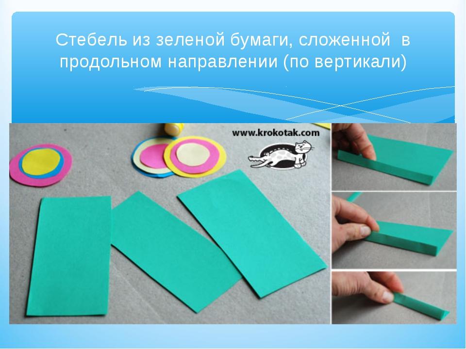 Стебель из зеленой бумаги, сложенной в продольном направлении (по вертикали)
