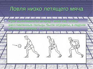 Ловля низко летящего мяча Руки вытягиваются вперед - вниз так, чтобы расставл