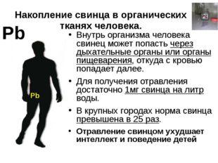 Накопление свинца в органических тканях человека. Pb Внутрь организма человек