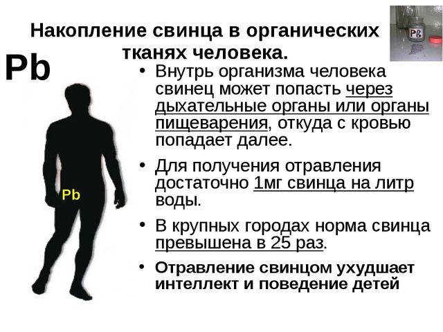 Накопление свинца в органических тканях человека. Pb Внутрь организма человек...