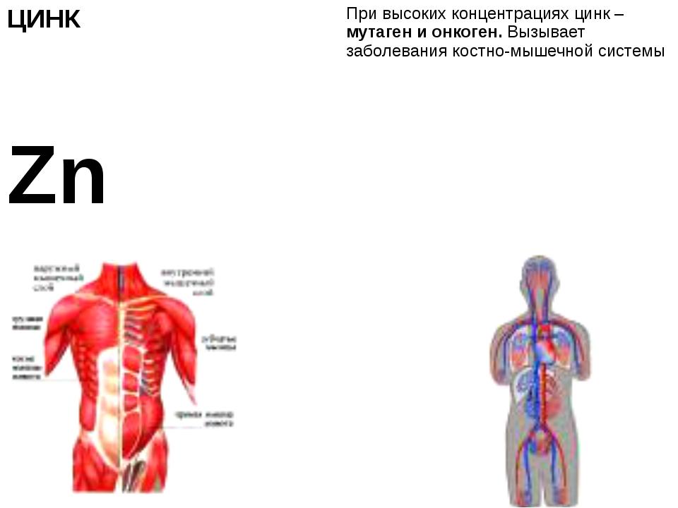 ЦИНК Zn При высоких концентрациях цинк –мутаген и онкоген.Вызывает заболевани...