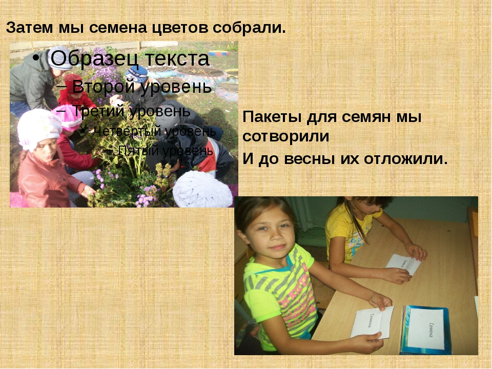 Затем мы семена цветов собрали. Пакеты для семян мы сотворили И до весны их о...