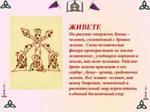 ЖИВЕТЕ На рисунке стержень буквы – человек, сплетённый с древом жизни . Сама