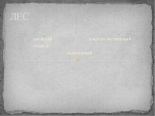 хвойный широколиственный (тайга) смешанный ЛЕС