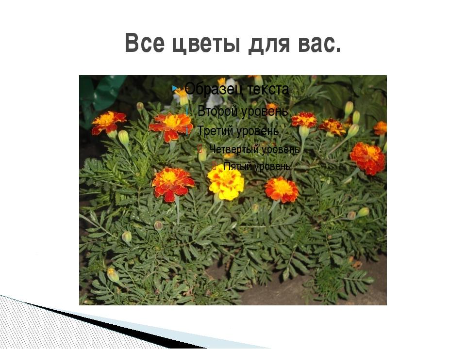 Все цветы для вас.
