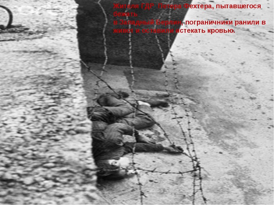 Жителя ГДР Петера Фехтера, пытавшегося бежать в Западный Берлин, пограничники...