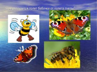 Чем отличается полет бабочки от полета пчелы?