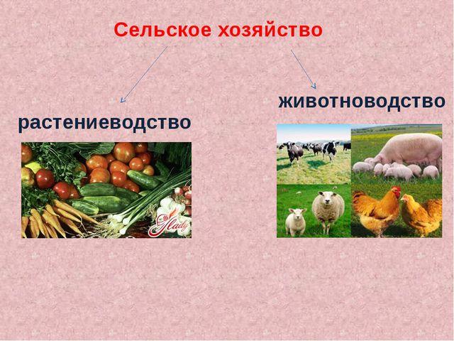 Сельское хозяйство растениеводство животноводство