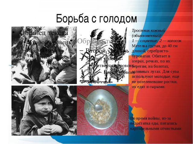 Борьба с голодом Тростник южный (обыкновенный): 1 — соцветие; 2 — колосок Мет...