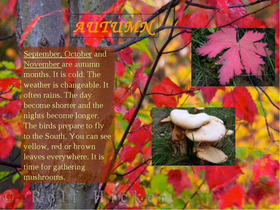 AUTUMN September, October and November are autumn months. It is cold. The wea...