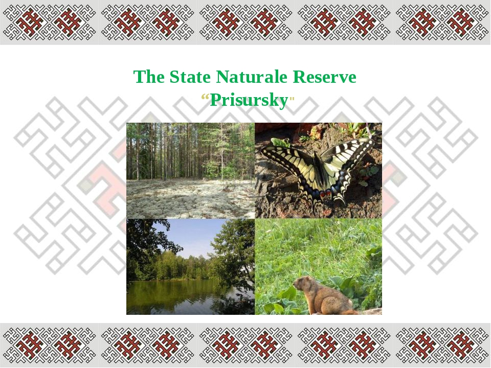 """The State Naturale Reserve """"Prisursky"""""""