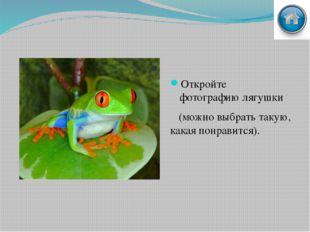 Выделение лягушки Выделите лягушку. Переместите её в созданный документ.