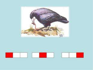 Всех прилетных птиц черней, Чистит пашню от червей. Целый день по пашне вскач