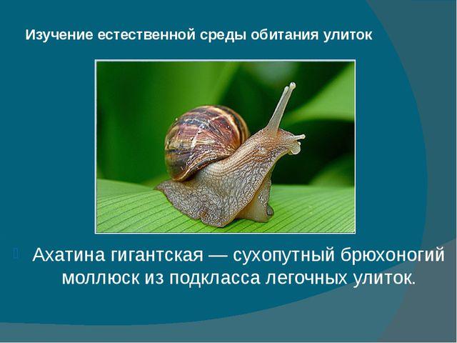 Изучение естественной среды обитания улиток Ахатина гигантская — сухопутный б...