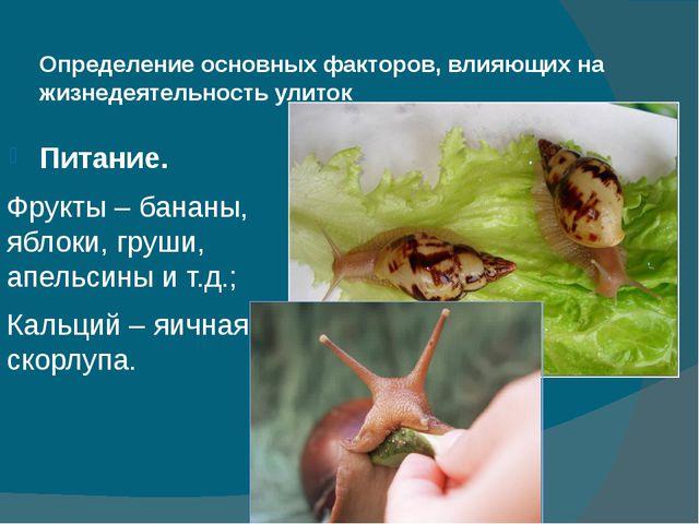 Определение основных факторов, влияющих на жизнедеятельность улиток Питание....