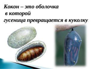 Кокон – это оболочка в которой гусеница превращается в куколку.