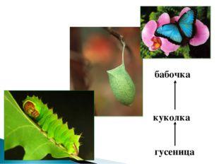 гусеница куколка бабочка