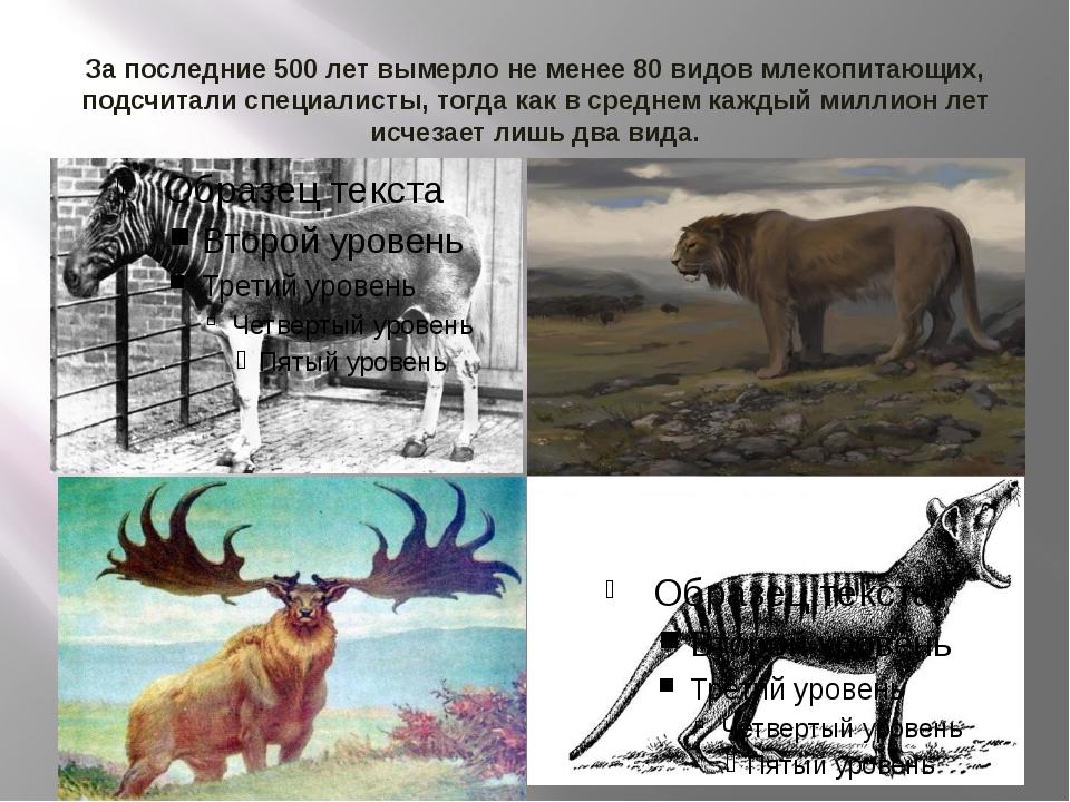 За последние 500 лет вымерло не менее 80 видов млекопитающих, подсчитали спец...