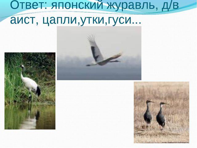 Ответ: японский журавль, д/в аист, цапли,утки,гуси...