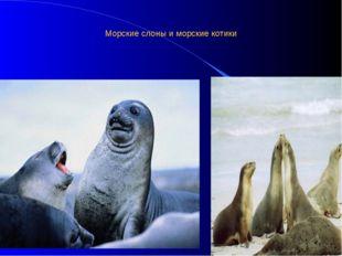 Морские слоны и морские котики
