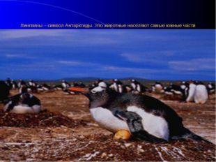 Пингвины – символ Антарктиды. Это животные населяют самые южные части нашей п