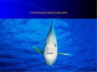 Глубоководная коралловая рыба
