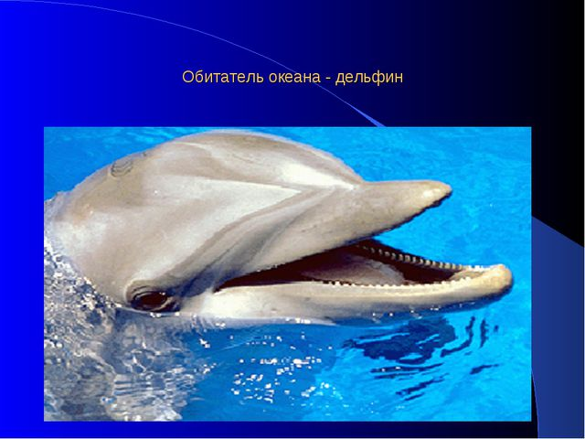 Обитатель океана - дельфин