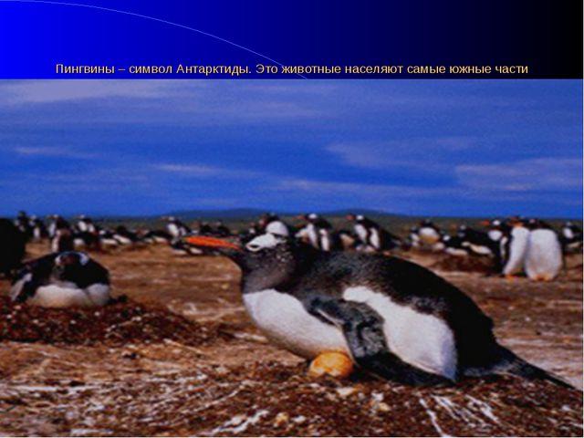 Пингвины – символ Антарктиды. Это животные населяют самые южные части нашей п...