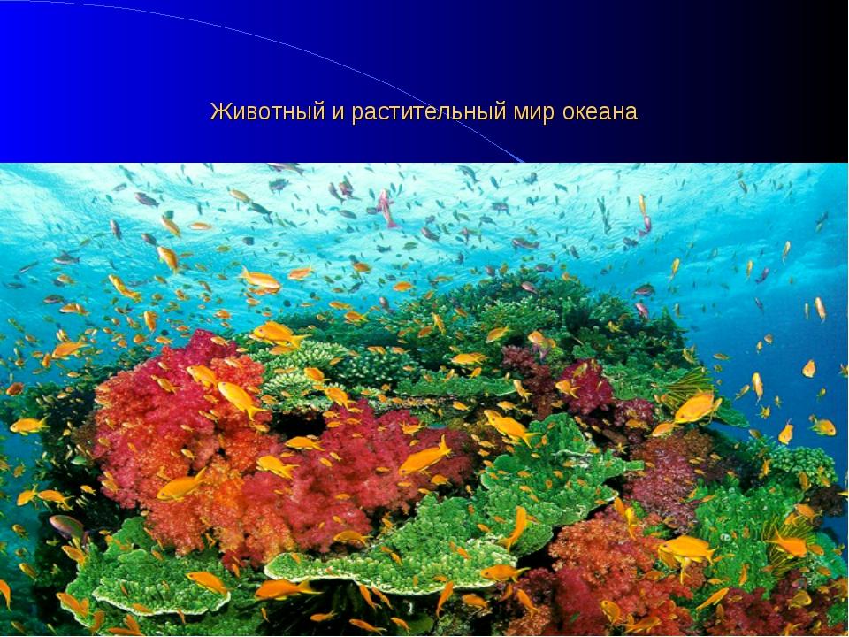 Животный и растительный мир океана