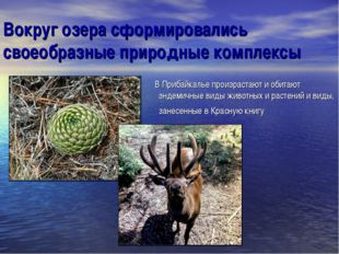 Вокруг озера сформировались своеобразные природные комплексы В Прибайкалье пр
