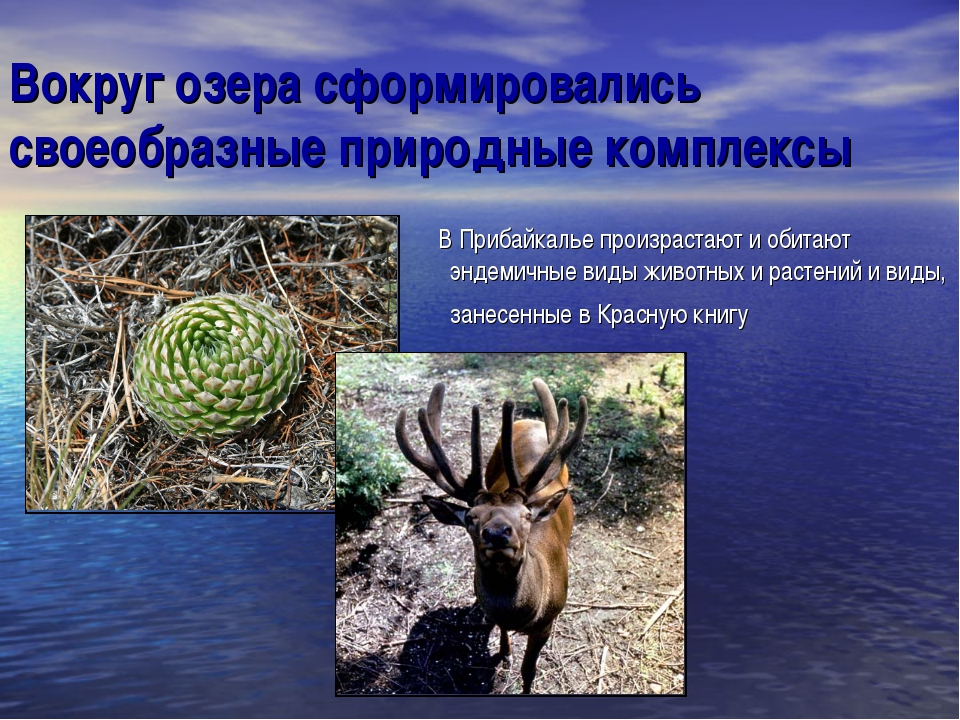 Вокруг озера сформировались своеобразные природные комплексы В Прибайкалье пр...
