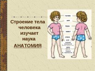 Строение тела человека изучает наука АНАТОМИЯ голова шея грудь живот спина ру