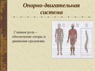 Опорно-двигательная система Главная роль – обеспечение опоры и движения орган