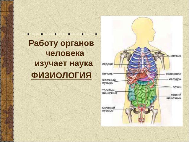 Работу органов человека изучает наука ФИЗИОЛОГИЯ