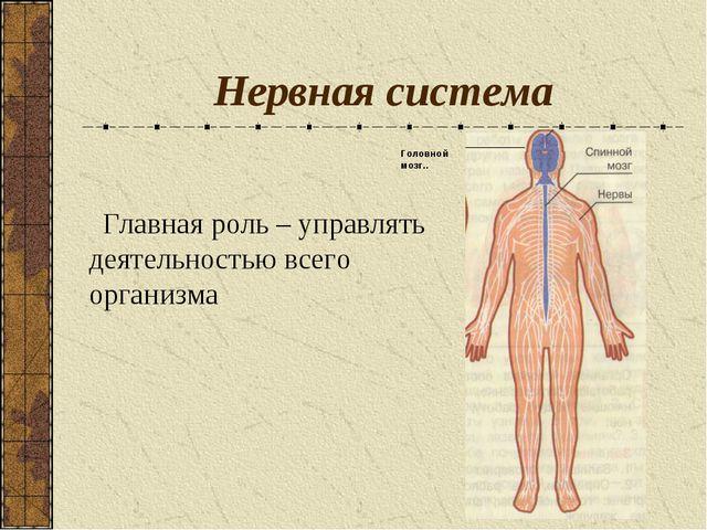 Нервная система Главная роль – управлять деятельностью всего организма Головн...