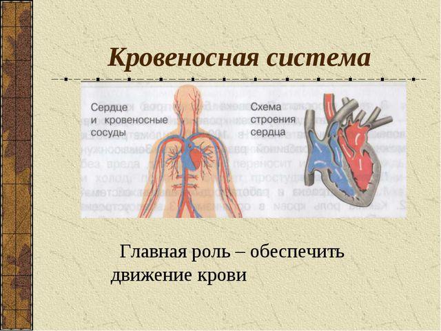 Кровеносная система Главная роль – обеспечить движение крови