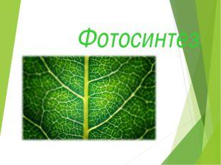 Фотосинтез.