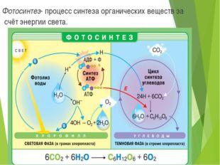 Фотосинтез- процесс синтеза органических веществ за счёт энергии света.