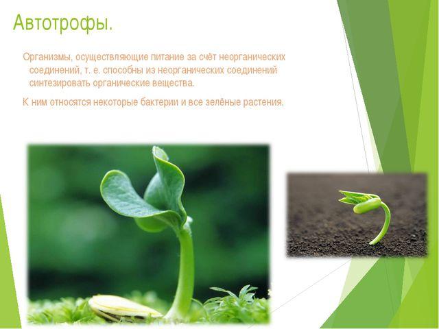 Автотрофы. Организмы, осуществляющие питание за счёт неорганических соединени...
