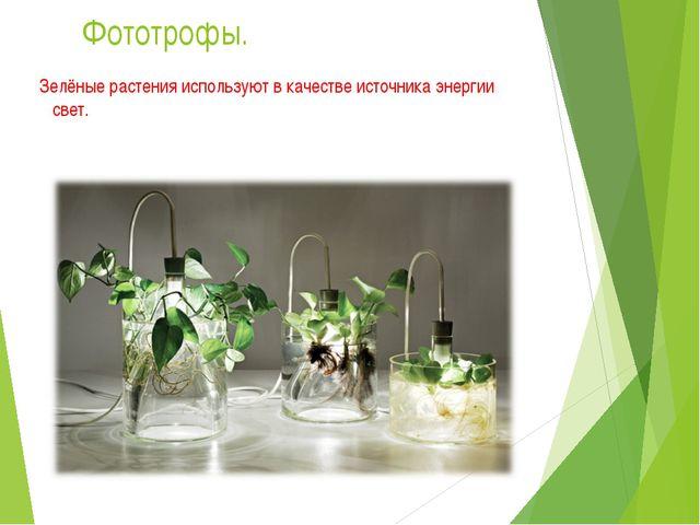 Фототрофы. Зелёные растения используют в качестве источника энергии свет.
