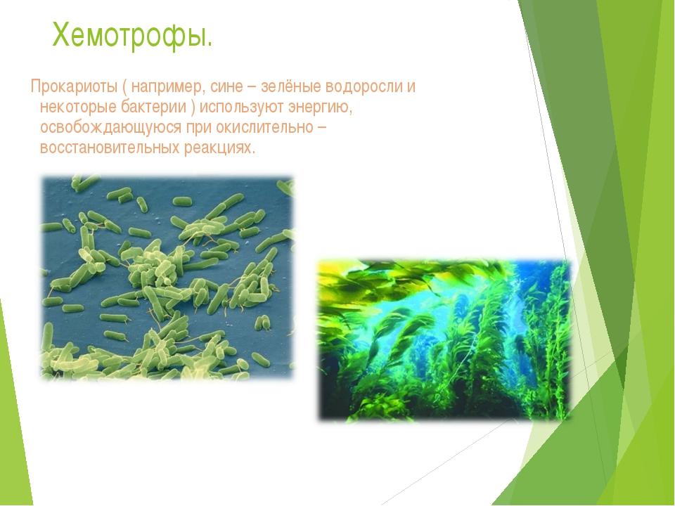 Хемотрофы. Прокариоты ( например, сине – зелёные водоросли и некоторые бактер...