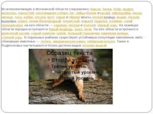 Из млекопитающих в Московской области сохранилисьбарсук,белка,бобр,выдра,