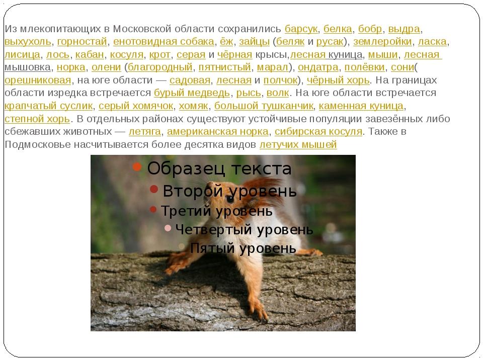 Из млекопитающих в Московской области сохранилисьбарсук,белка,бобр,выдра,...