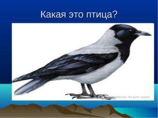 Какая это птица?