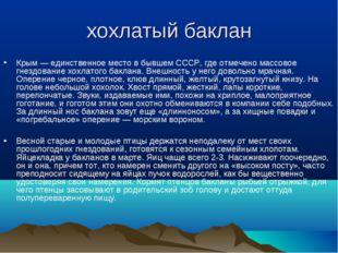 хохлатый баклан Крым — единственное место в бывшем СССР, где отмечено массово