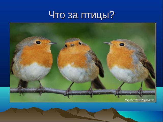 Что за птицы?